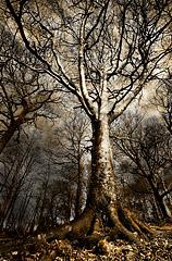 Castlehead Wood Toned