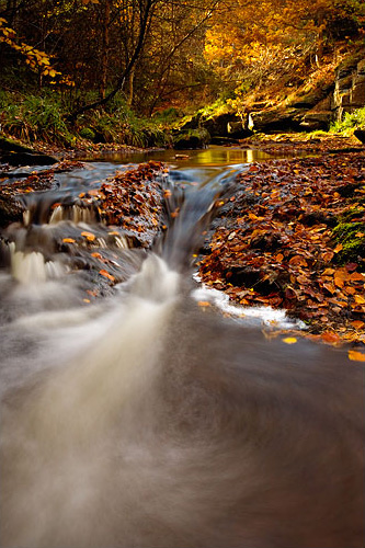autumn on spurlswood beck